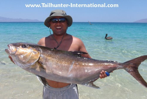 Amberjack Junior Azores tags