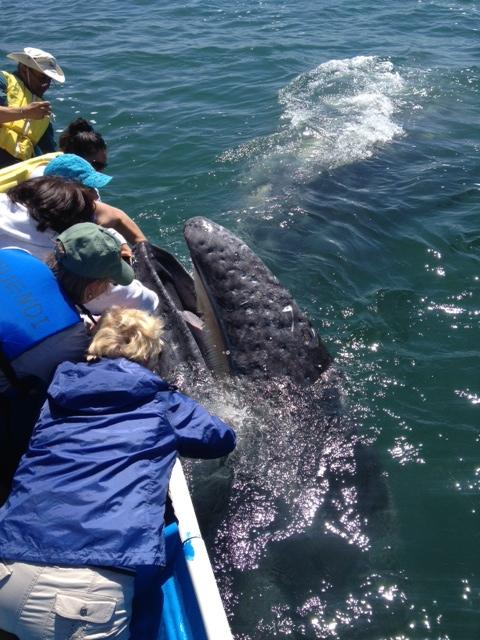 Deb_&_whale
